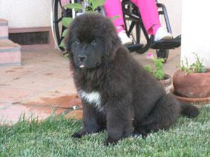 Doozy as a puppy