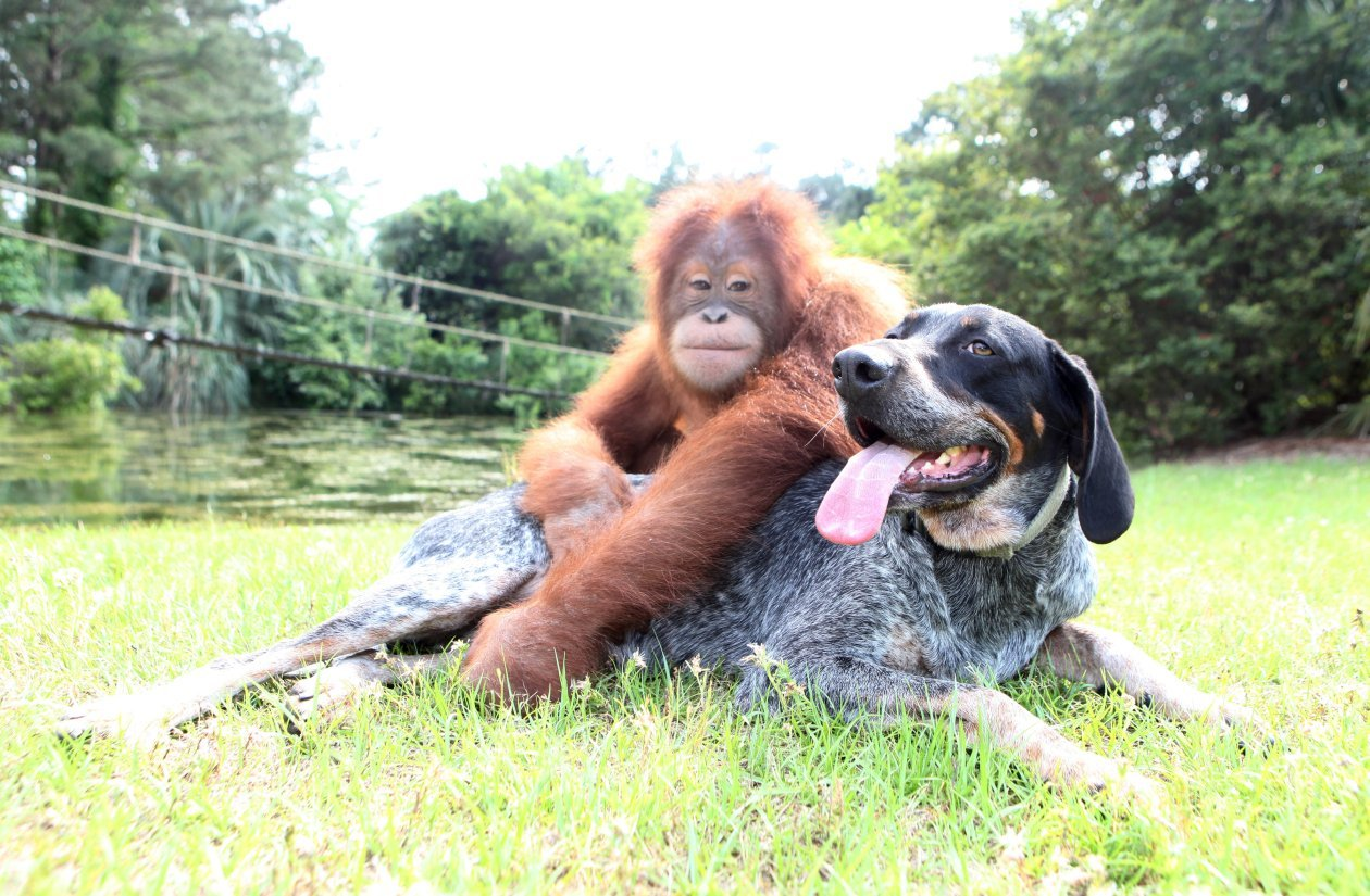 Suryia and Roscoe: The True Story of an Unlikely Friendship: Bhagavan