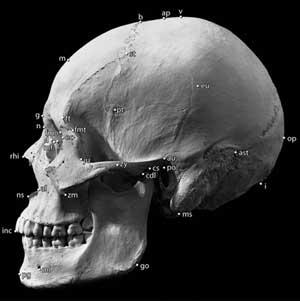 Bones and Osteometric Points