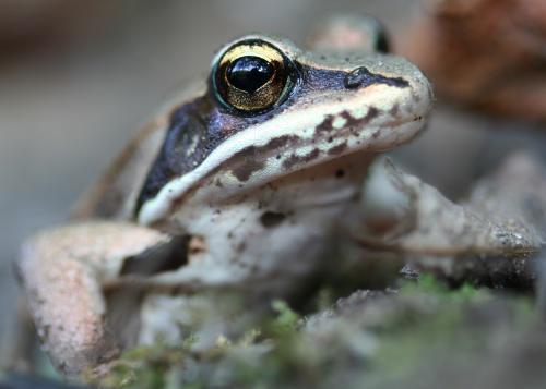 Canon macro 60mm image of a lizard