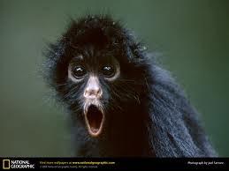 Image of The Spun Monkey