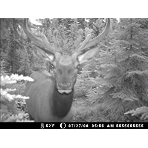Moultrie Game Spy I-40 Infrared Flash Game Camera