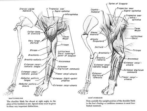 Anatomy For The Artist Jeno Barcsay Pdf Editor - codercrise