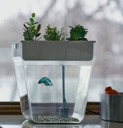 Water garden fish tank aquafarm herb garden fluid growers for Fish tank herb garden