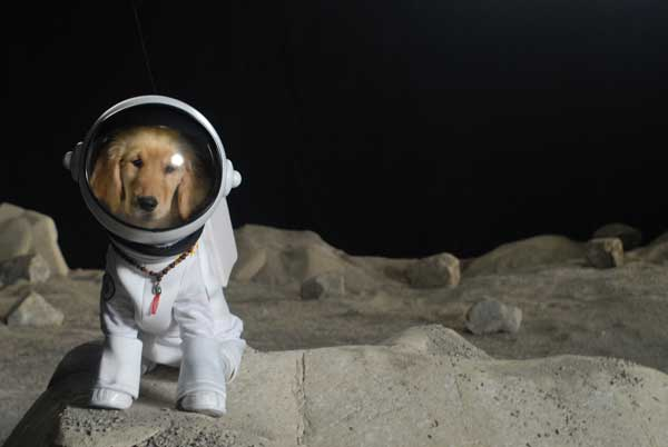 Doge astronaut page 5 pics about space - Best dogs for small spaces pict ...