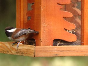http://g-ecx.images-amazon.com/images/G/01/electronics/Telescope/Celestron/4-Chickadee4._V202921034_.jpg