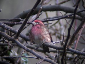Finch shot at 100X at a distance of 20 yards.