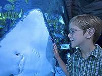 San Antonio Aquarium: Admission or Membership