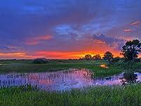 Everglades Adventure or Miami to Key West Tour