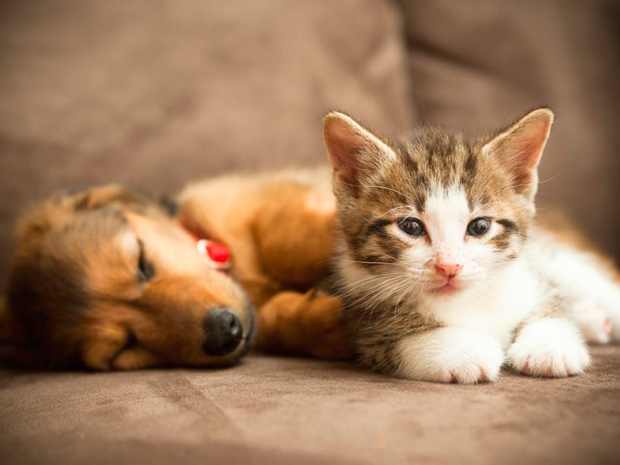 Pet Exam with Wellness Membership Fee Waived