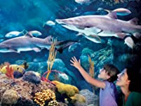 Full-Day Passes to The Florida Aquarium