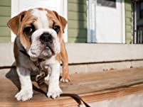 $50 for $100 to Spend on Pet-Sitting Services