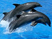 Admission for Two or Four to Dolphin & Manatee Tour