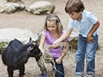Petting Farm or Monster Truck Event for Kids