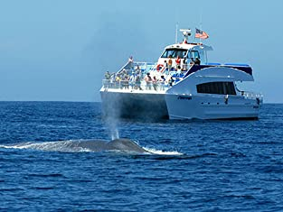Dolphin and Sea Life Cruise from Harbor Breeze Cruises