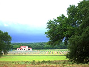 Two- or Three-Night Hill Country Vineyard Getaway