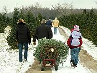 U-Cut Douglas Fir Christmas Tree
