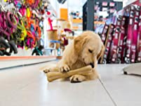 $40 to Spend on Holistic Pet Food and Supplies