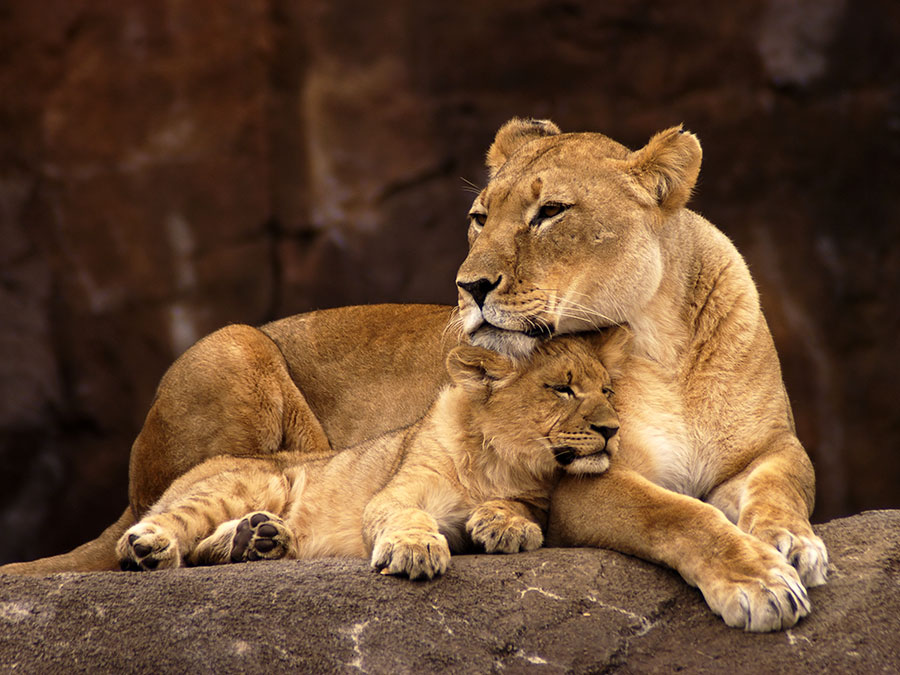 Wildlife Safari Tickets