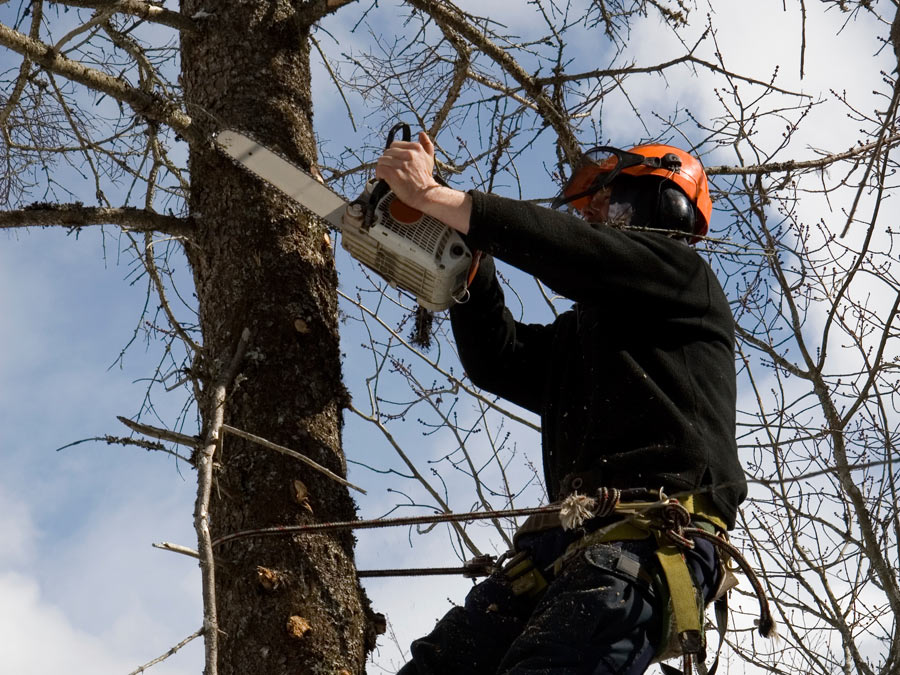 $200 to Spend on Tree Services