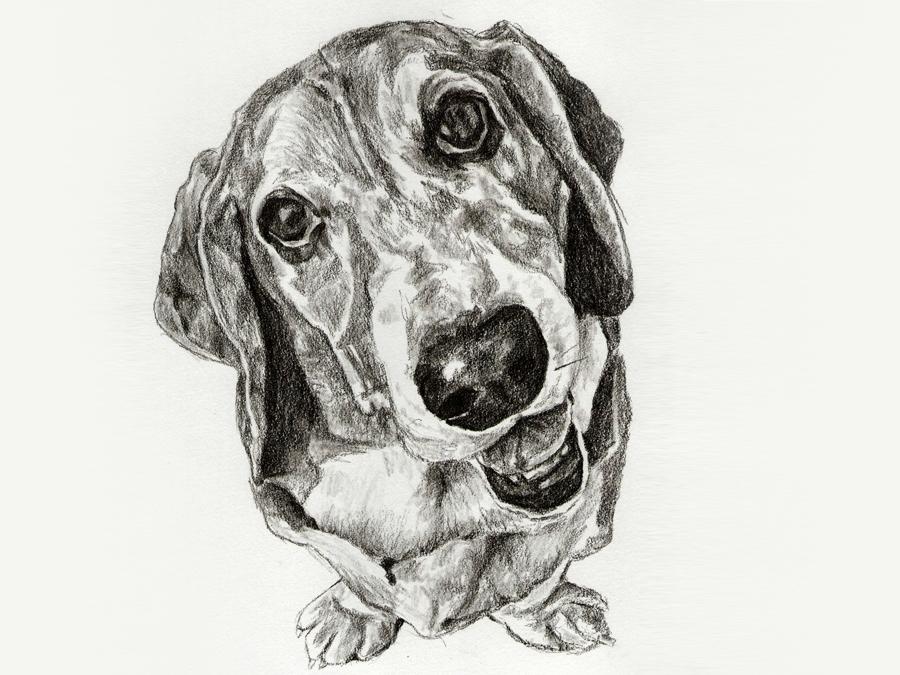 Original 11x14 Pet Portrait