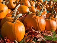 Pumpkin Patch Admission for Two or Four