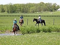 Horseback Riding Lesson