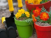 $30 to Spend on Plants & Supplies at Garden World