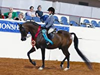 One or Two Private Horseback Riding Lessons