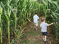 Corn Maze and Fall Activities at Keller's Farm