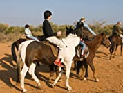One-Hour Horseback Ride for Two or Four