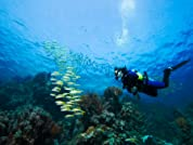 Scuba Certification with Catalina Island Getaway