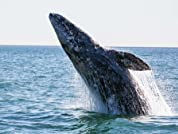 Whale-Watching Tour with Ocean Explorer Cruises
