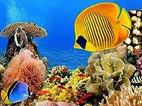 Portland Aquarium Admission for Two or Four