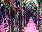 Passes or $100 to Spend on a Party at OdySea Mirror Maze