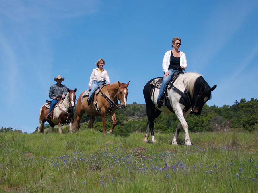 Horseback Trail Ride for One, Two, or Four