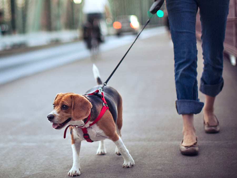 Dog-Walking Sessions with GPS-Enabled Pet Tracking