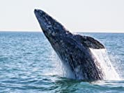 Whale Watching Tour with Newport Landing Cruises