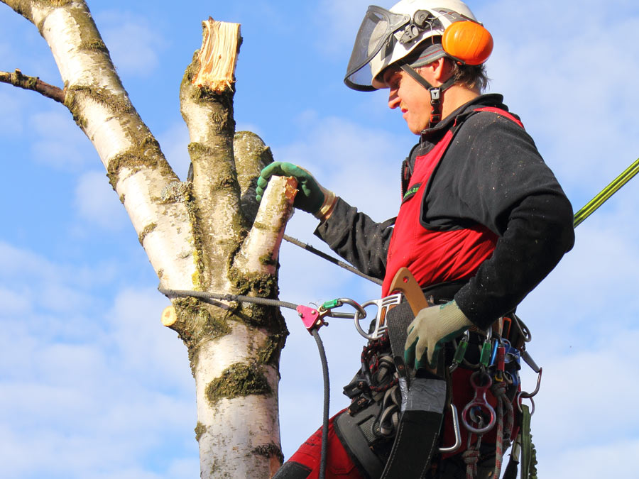 $250 to Spend on Tree Maintenance Services