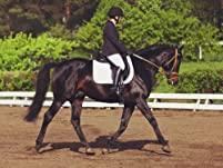 Four Semi-Private Horseback Riding Lessons
