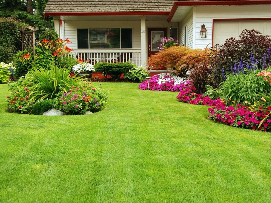 Mowing and Edging Services