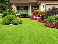 Weed Control Treatment from Weed Man