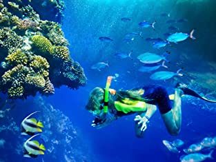 PADI Certification Course or Scuba Diving Class