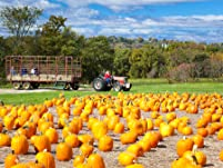 Farm Park with Pumpkin or Zombie Paintball