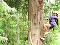 Canopy Tree Climbing for Two on Bainbridge Island