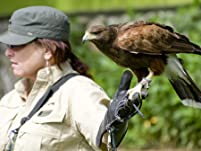 Falconry Lesson for One or Two People