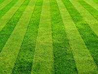 Organic Lawn Fertilization with Optional Maintenance