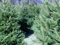 Holiday Wreath, $60 to Spend, or Premium Fraser Fir Tree Delivery