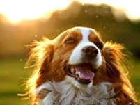 Comprehensive Pet Dental Cleaning and Exam