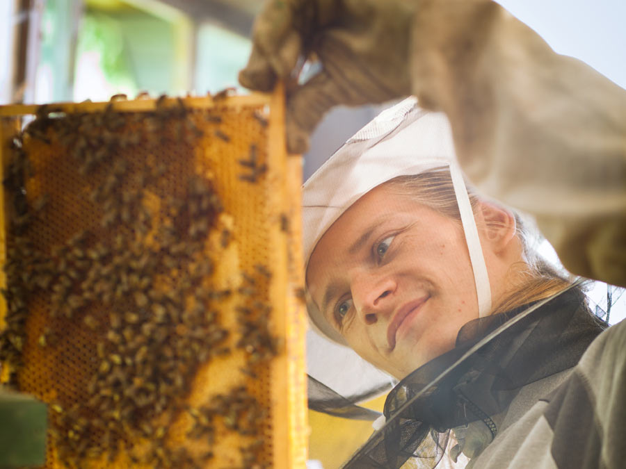 Three-Hour Beekeeping Class